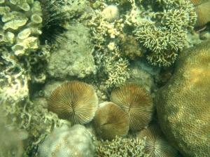 coral garden6 batangas