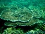 coral garden7 batangas